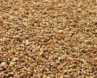 Novi cenovni maksimum pšenice